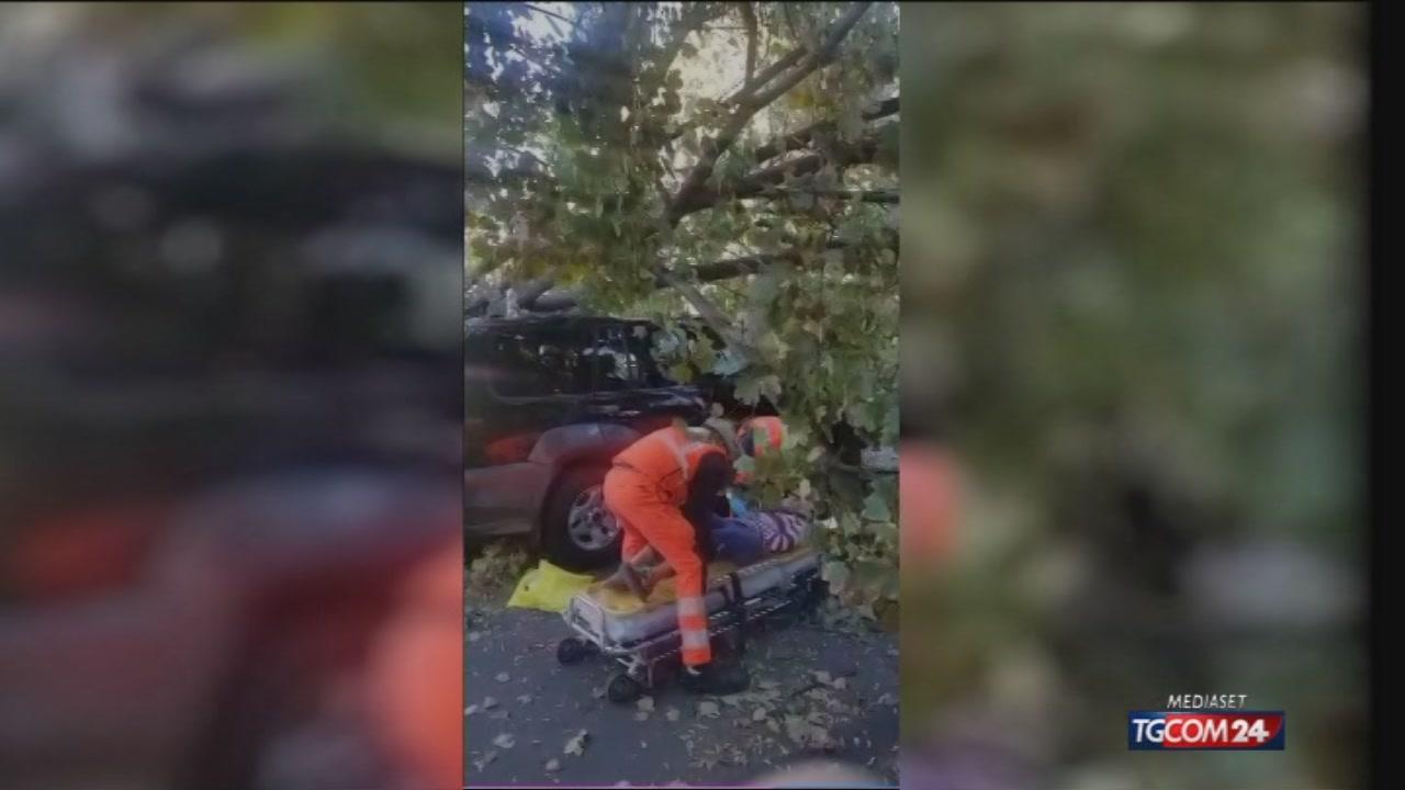 Video tgcom24 milano albero su un 39 auto tre feriti for Aste giudiziarie milano ultimi arrivi