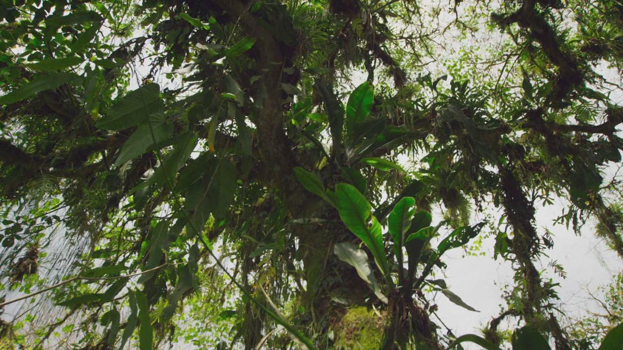 Video planet earth migliaia di piante su un solo albero for Solo piante