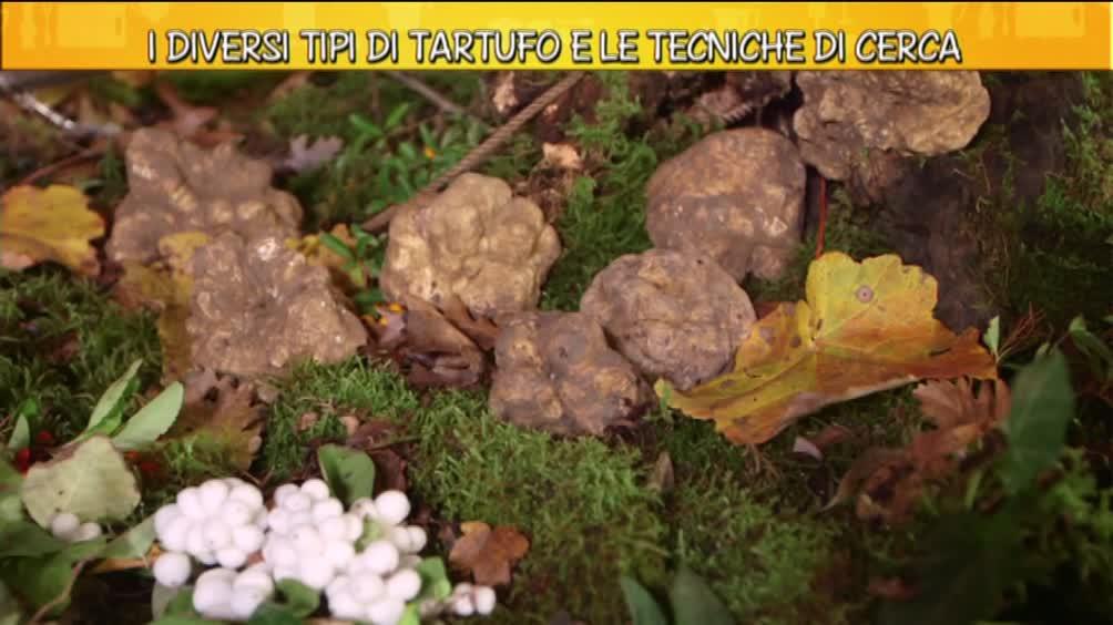 Video ricette all 39 italiana i diversi tipi di tartufo - Diversi tipi di trecce ...